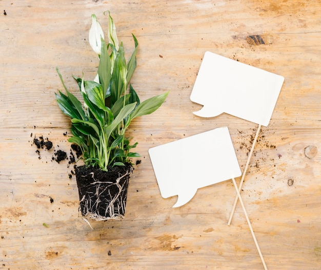 Burbujas en blanco del discurso y planta en maceta verde sobre escritorio de madera