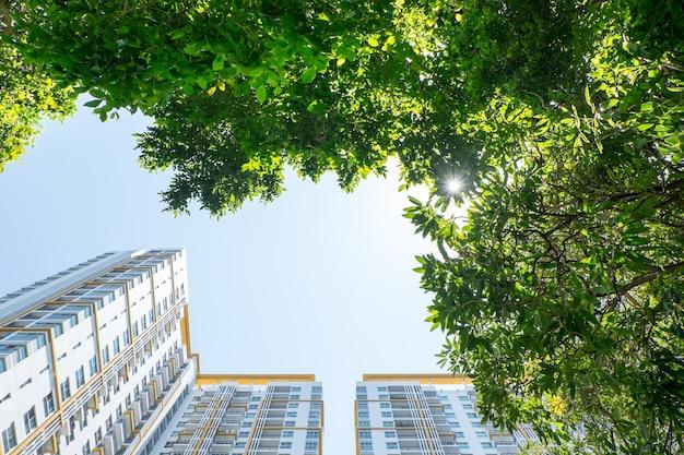 Buscando en el árbol y la construcción, concepto de visión de bienes raíces
