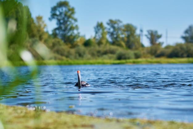 Buzo en traje húmedo con máscara y snorkel bajo el agua en el lago