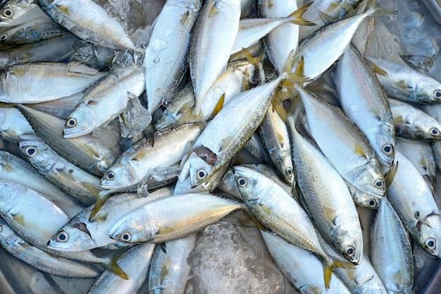 Caballa de pescado en el mercado