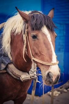 El caballo en el arnés en el pueblo.