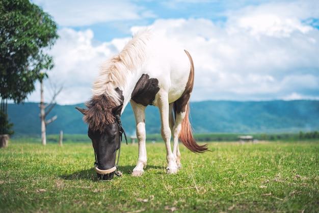 Caballo comiendo hierba en el campo