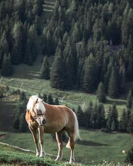 Caballo marrón con melena blanca en la cima de una colina con pinos en el fondo