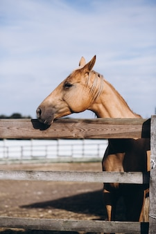 Caballo marrón en el rancho