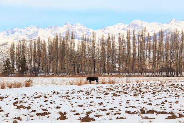 Caballo pasta sobre un fondo de montañas de invierno