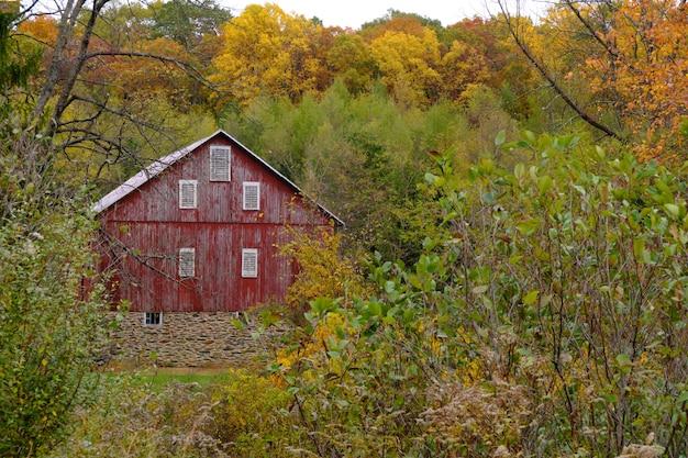 Cabaña de madera abandonada en un bosque rodeado por muchos árboles