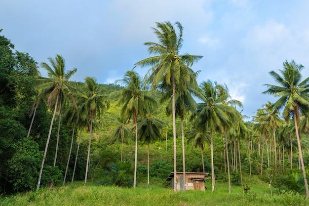 Una cabaña entre palmeras en la jungla