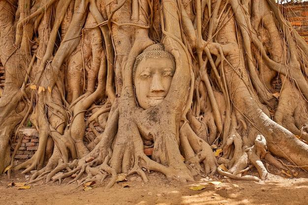 Cabeza de buda de ayutthaya en las raíces de los árboles, el templo budista wat mahathat en tailandia