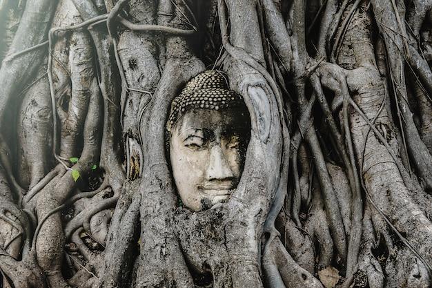 Cabeza de buda de ayutthaya en las raíces de los árboles, templo budista wat mahathat en tailandia