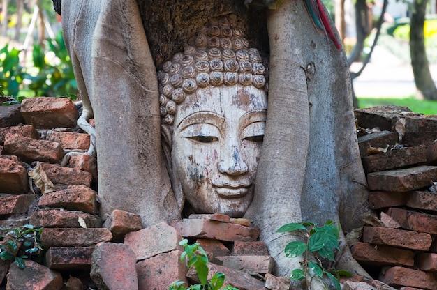Cabeza de buda en banyan tree en el sitio arqueológico del norte de tailandia, la tradición del arte tailandés