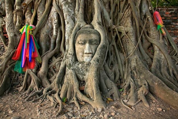 Cabeza de buda wat mahathat en el árbol, ayutthaya