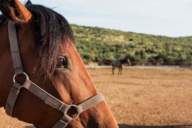 Cabeza de caballo de primer plano con fondo borroso