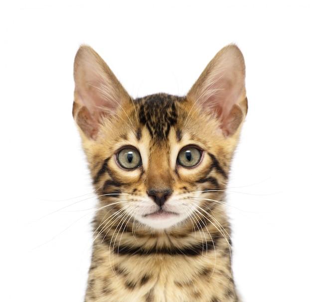 Cabeza de gatito