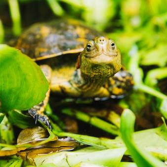 En la cabeza de la tortuga