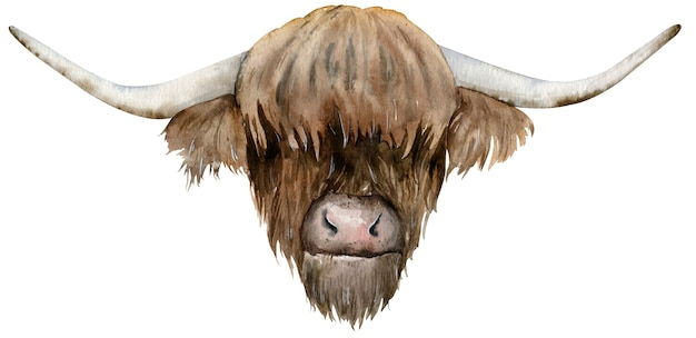 Cabeza de vaca escocesa de las tierras altas. ilustración acuarela dibujada a mano.