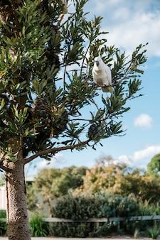 Cacatúa en el árbol