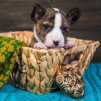 Cachorro basenji en una canasta de madera con corazón