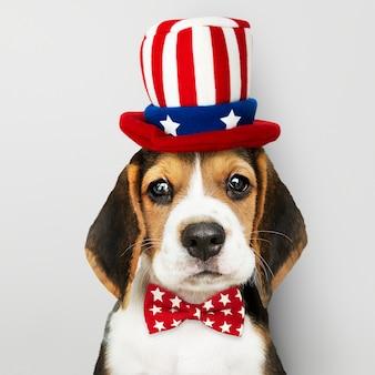 Cachorro de beagle americano