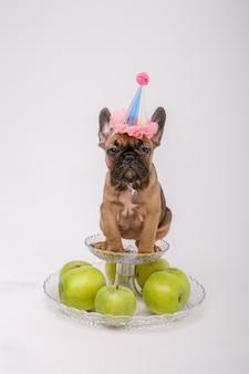 Un cachorro de bulldog francés con un sombrero de cumpleaños se sienta sobre un fondo blanco.