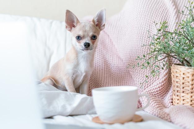 Cachorro en la cama con una taza de té o café caliente puppy