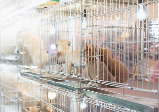 Cachorro en una jaula para vender en el mercado de mascotas, personas que compran mascotas en la tienda de mascotas