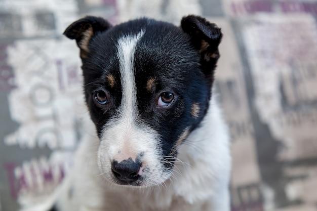 Un cachorro con ojos tristes acostado en el sofá mira al dueño con una mirada amable.