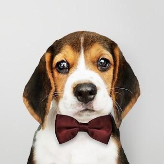 Cachorro con pajarita