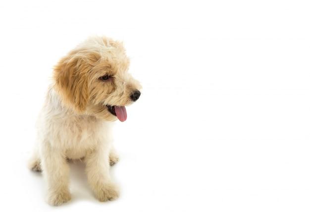 Cachorro de perro aislado en el fondo blanco