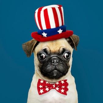 Cachorro de pug americano