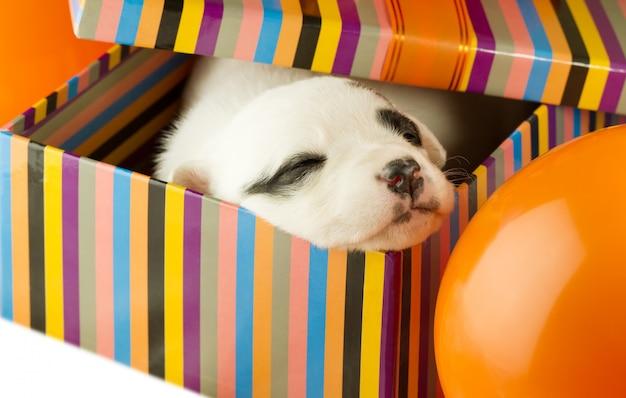 Cachorro recién nacido durmiendo