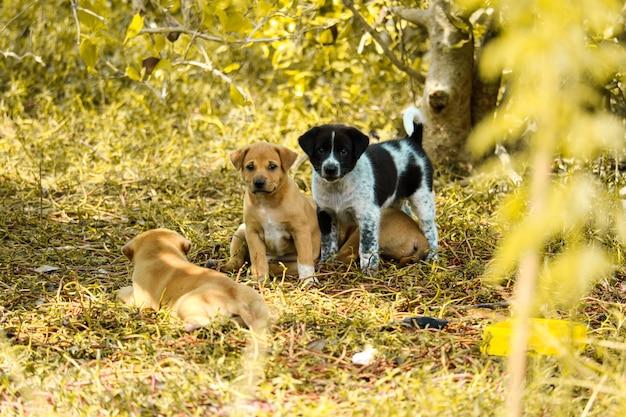 Cachorros callejeros están jugando bajo los arbustos en tierra baldía