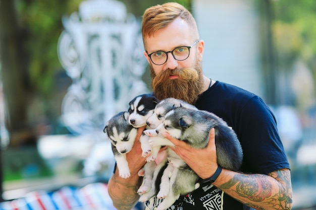 Cachorros husky siberiano. camada de perros en manos del criador. cachorros