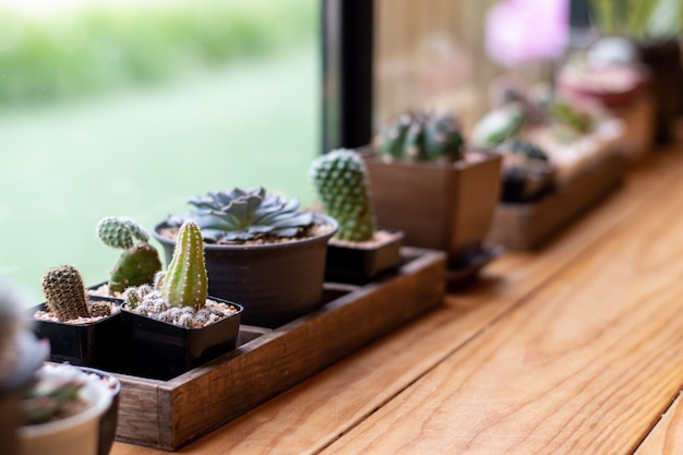 Cactus cerca de la ventana grande, primer plano