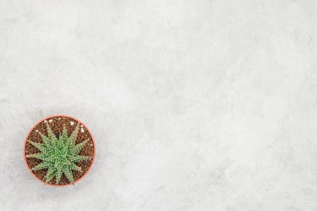 Cactus y cuaderno en la mesa de la oficina, fondo de hormigón gris, plano