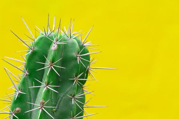 Cactus con espinas afiladas