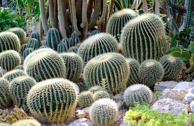 Cactus en el invernadero del jardín botánico.