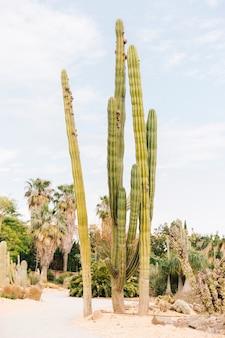 Cactus largo contra el cielo nublado