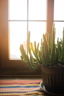 Cactus en maceta en el alféizar de la ventana