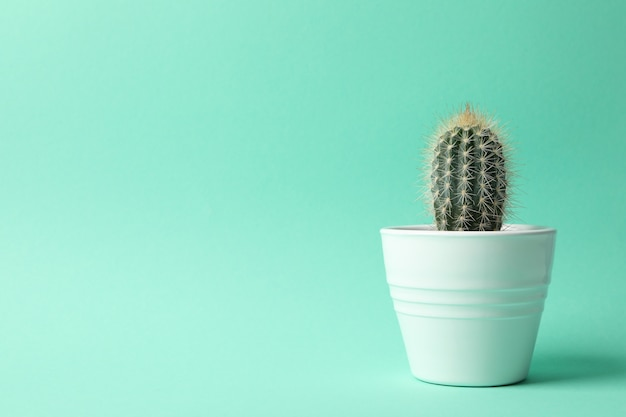 Cactus en maceta sobre superficie de menta