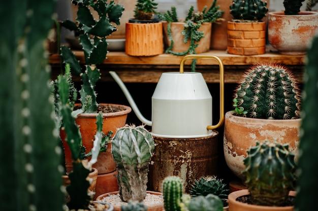 Cactus en una maceta con una variedad de plantas.