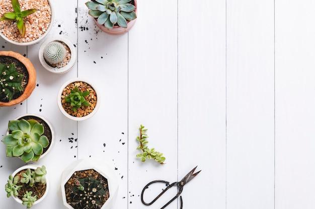 Cactus en macetas y borde suculento plano con espacio en blanco