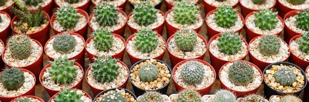 Cactus en macetas en la tienda de plantas.