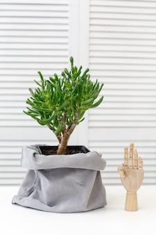 Cactus y mano decorativa de madera en el interior