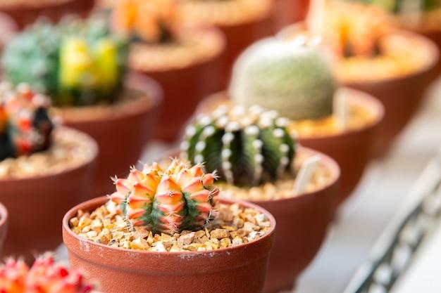 Cactus en mercado de flores