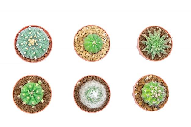 Cactus o suculentas en la olla aislada con fondo blanco