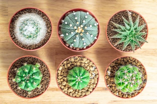 Cactus o suculentas en la olla en el fondo de la mesa de oficina de madera