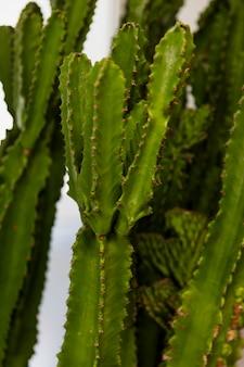 Cactus de oficina
