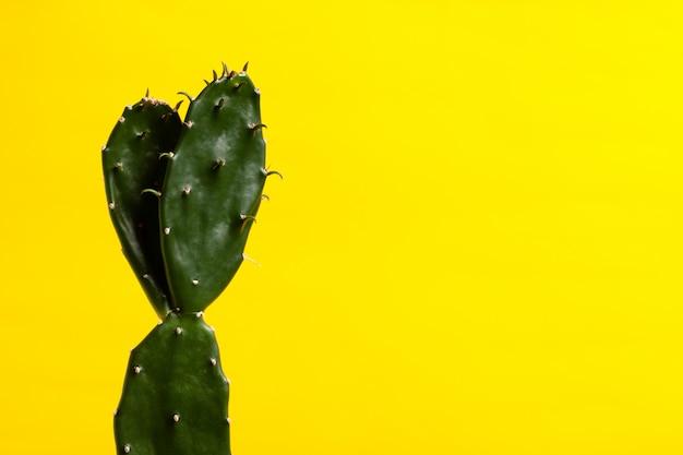 Cactus de planta en el fondo amarillo