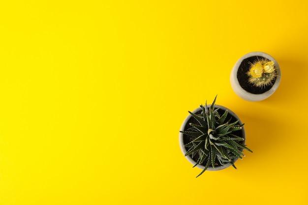 Cactus y planta suculenta sobre superficie amarilla