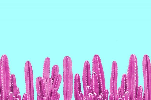 Cactus rosa sobre fondo turquesa